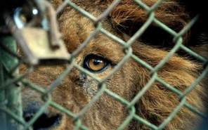 Did you know that Costa Rica will be the first country in the world to close its Zoos?