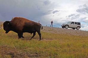 ¿Sabías que Ottawa ha destinado 27 millones de dólares a la reconstrucción de Parque Wood Buffalo?