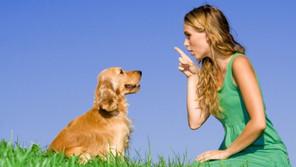 ¿Sabías que se encuentran entrenando perros que identifican a portadores de covid19?