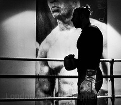 The boxer.