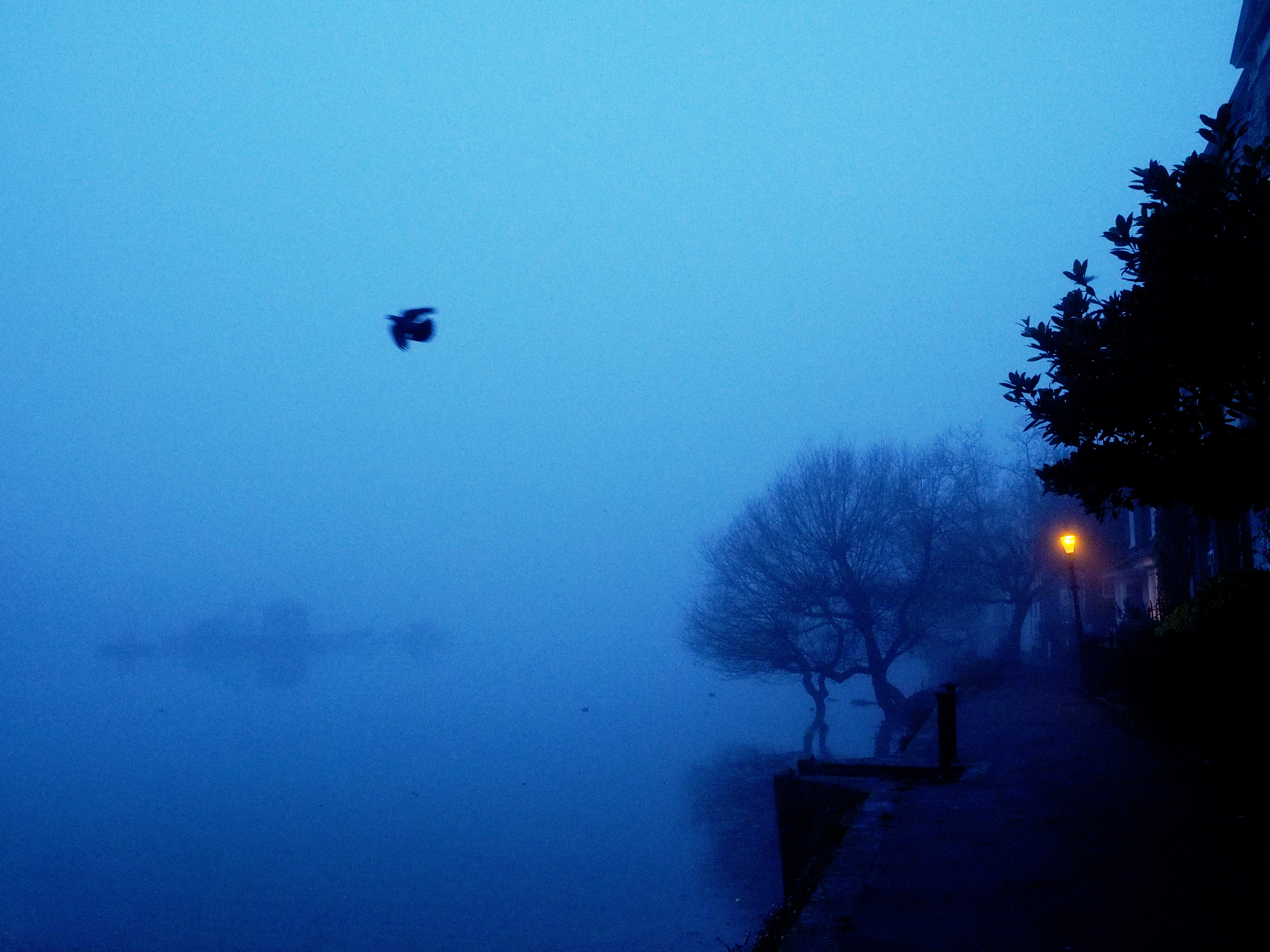 Dove and fog-1