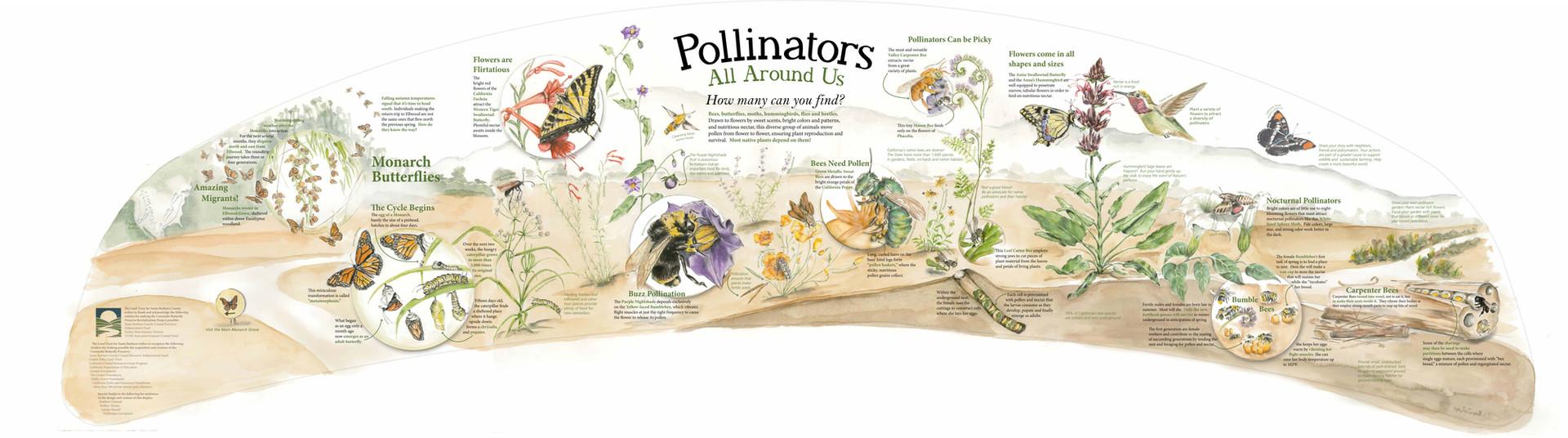 Pollinators All Around Us