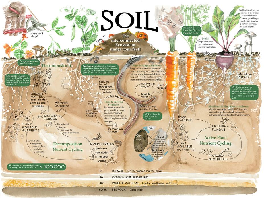SBCC_permaculture_SOIL2.jpg