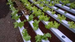 Canais de Cultivo Hidropônicos
