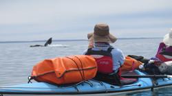Whalewatching&kayak.JPG