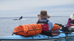 whale picture from_kayak