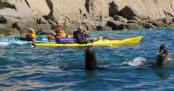 Sea Lion and Kayak 2.jpg