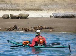 Kayak&sealionsdaytrips.JPG