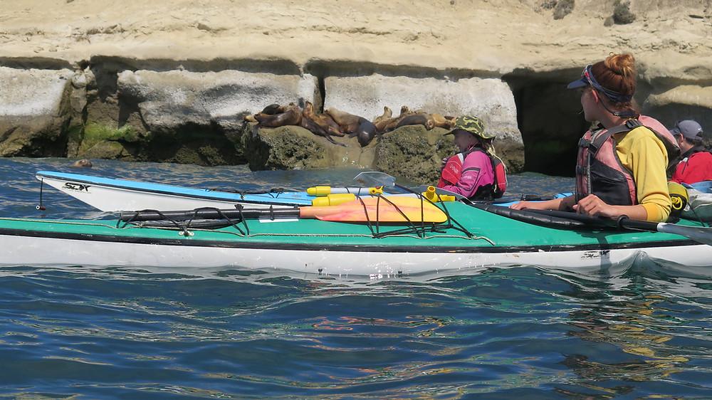 Salidas en Kayak observacion de Lobos Marinos