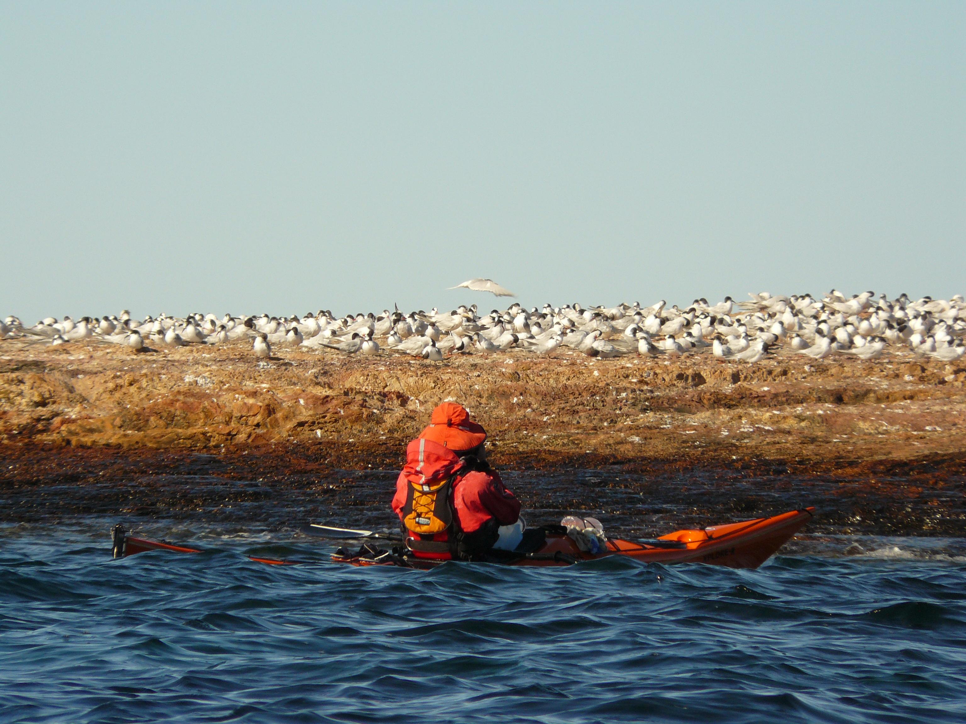 BirdWatching from a Kayak in Bustamante Bay.JPG