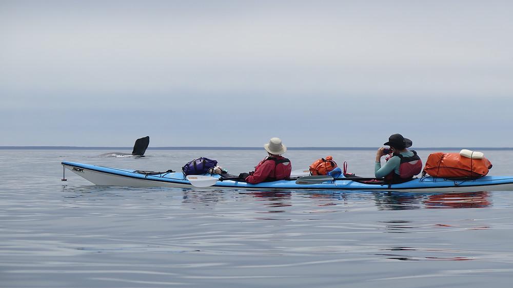 Sea Kayak and Whales Peninsula Valdes