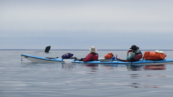 Sea Kayak Trips in Peninsula Valdes, Patagonia. Whale Season.