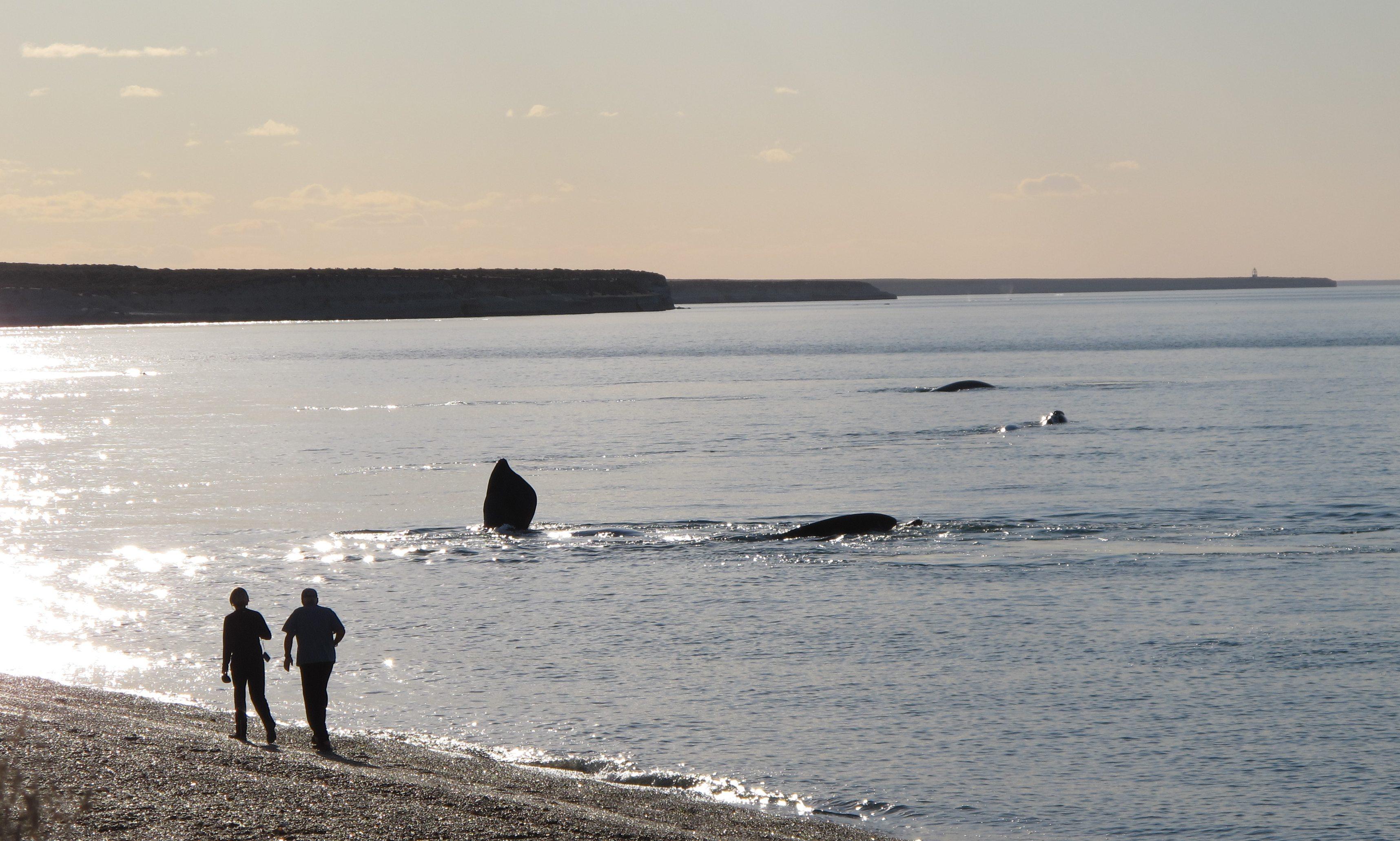 Observando ballenas desde costa.jpg