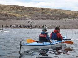 Kayak&PenguinsPatagoniaAutral.jpg