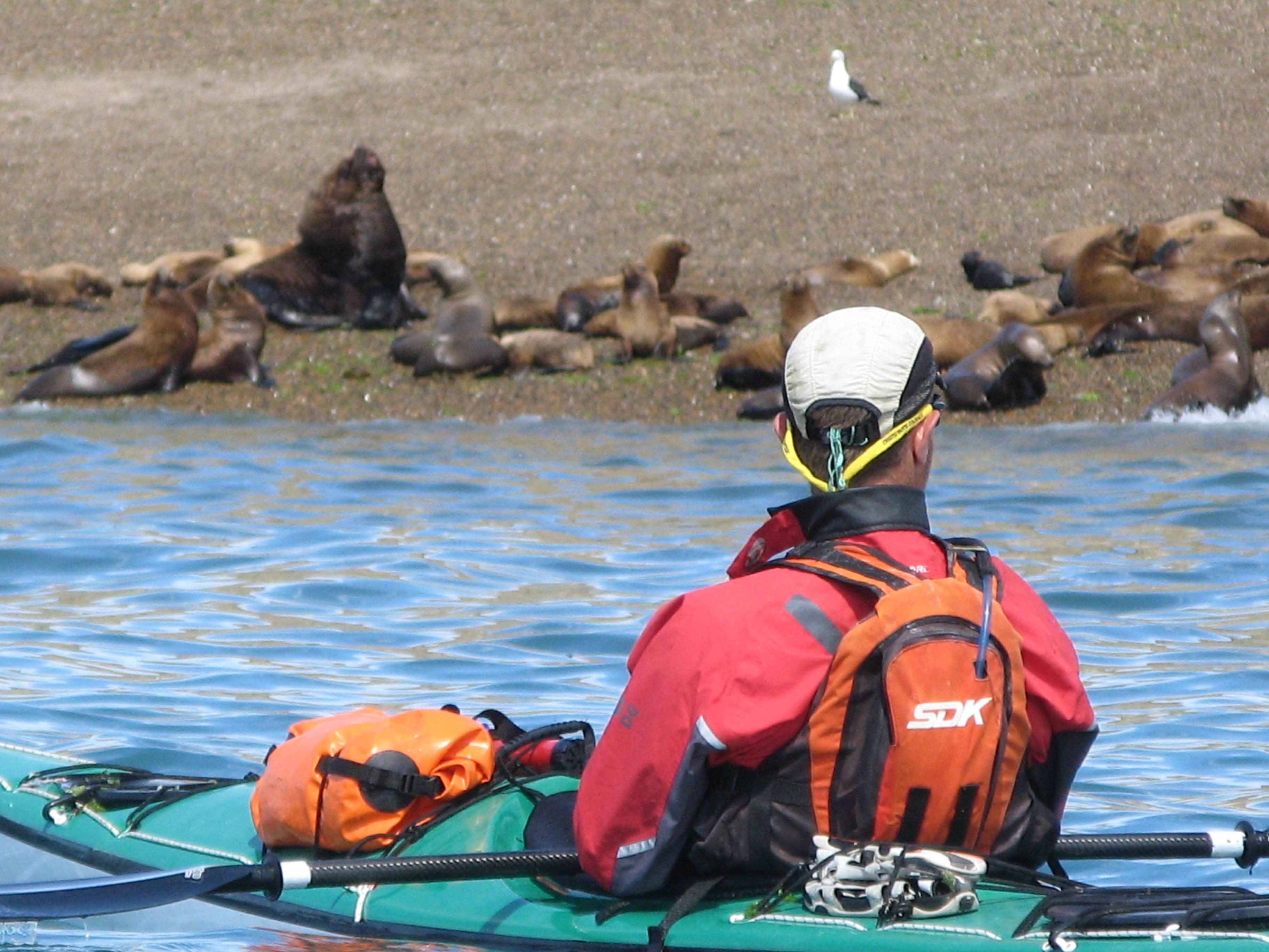 Sealions&kayak1.JPG