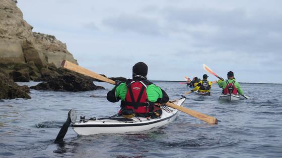 Salidas Diarias en Kayak. Temporada de Ballenas