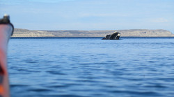 whale_kayak_expedition