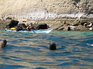 Kayakingwithsealionspeninsulavaldes.JPG
