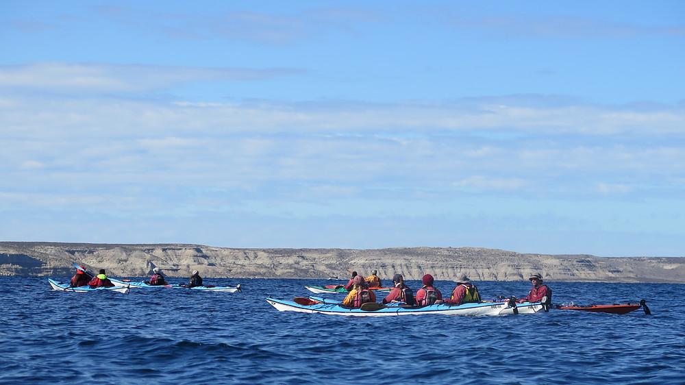 Salidas Diarias en Kayak golfo Nuevo y San jose. Peninsula Valdes