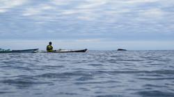 WHales&kayak3 2.JPG