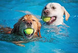 Swimming dogs 1.jpg