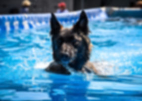 Dog in Pool.jpg