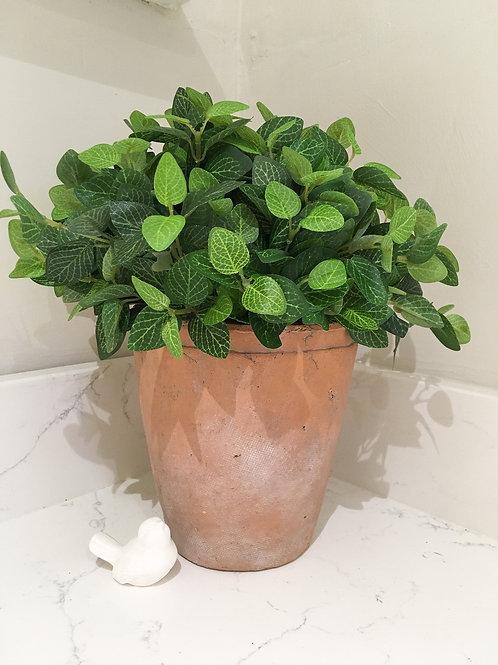 Rustic Ceramic Planter