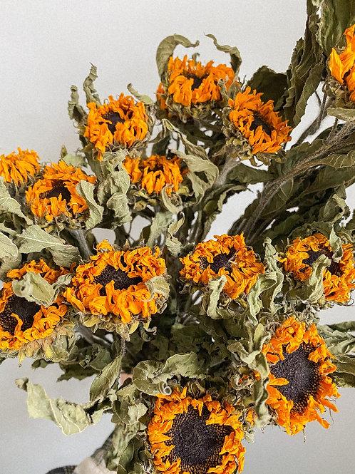 Dried Sunflower Bunch