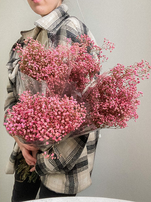 Preserved Pink Gypsophelia