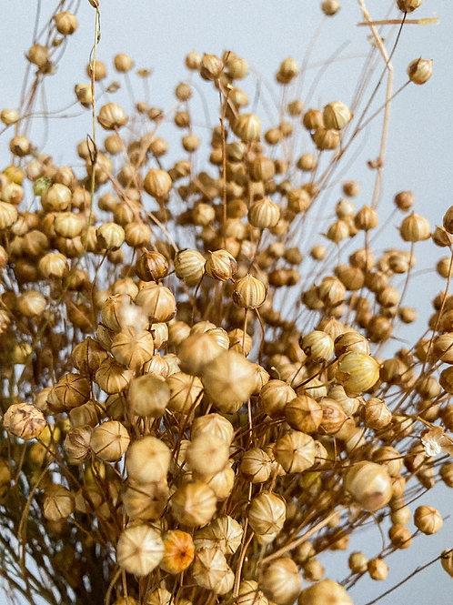 Dried Golden Linum