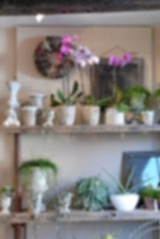 Florist shop display Potted plants, Orchids,succulants