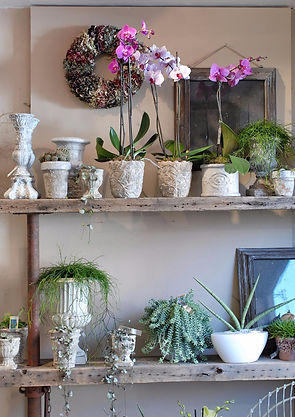 Shelf of beautiful potted plants