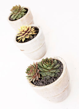 succulants in pots