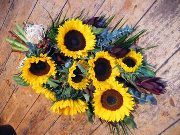 sun flower sheath