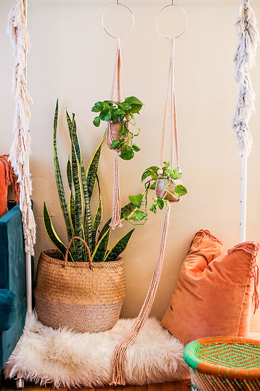 Avocado Dyed Blush Pink Plant Hanger