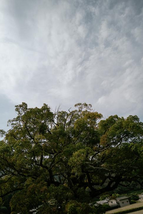 raphacaravanKOMATSUSHIMA-28.jpg