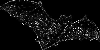 bat-147038_640.png