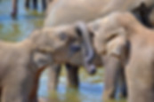 young-elephants-264711_640.jpg