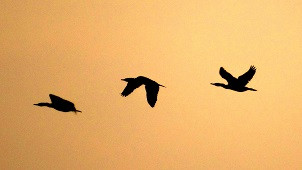 Fly_High.jpg