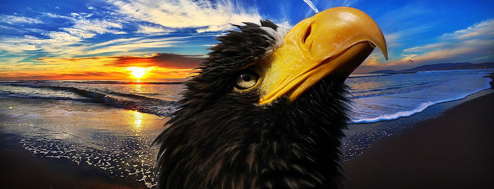 white-tailed-eagle-2865836_1920.jpg