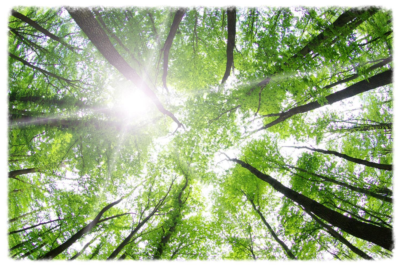 AROMARIA Naturopathy Care…自然療法 について
