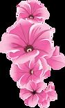 Bloemen2.png