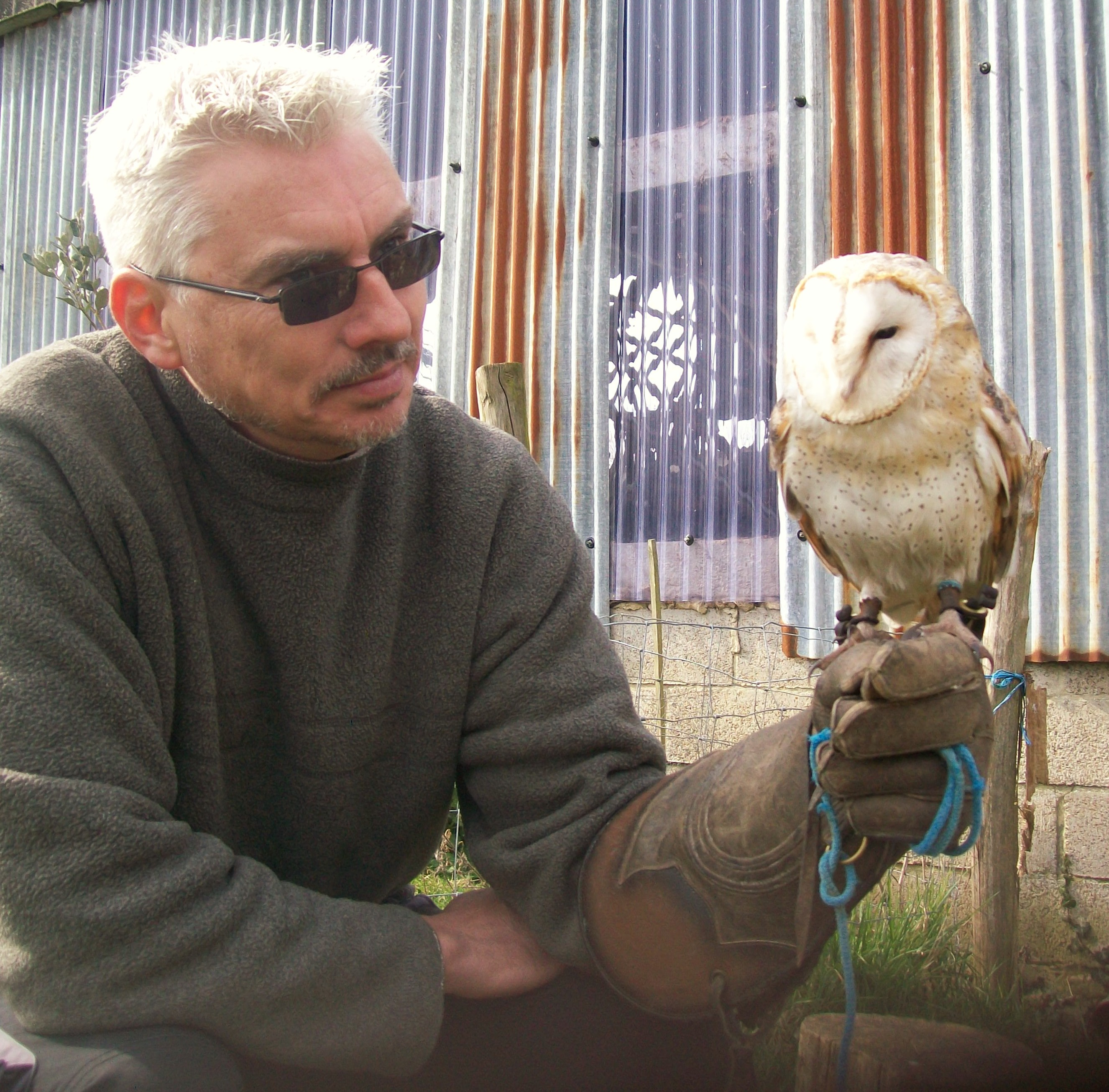 SussexFalconry 038 (2)