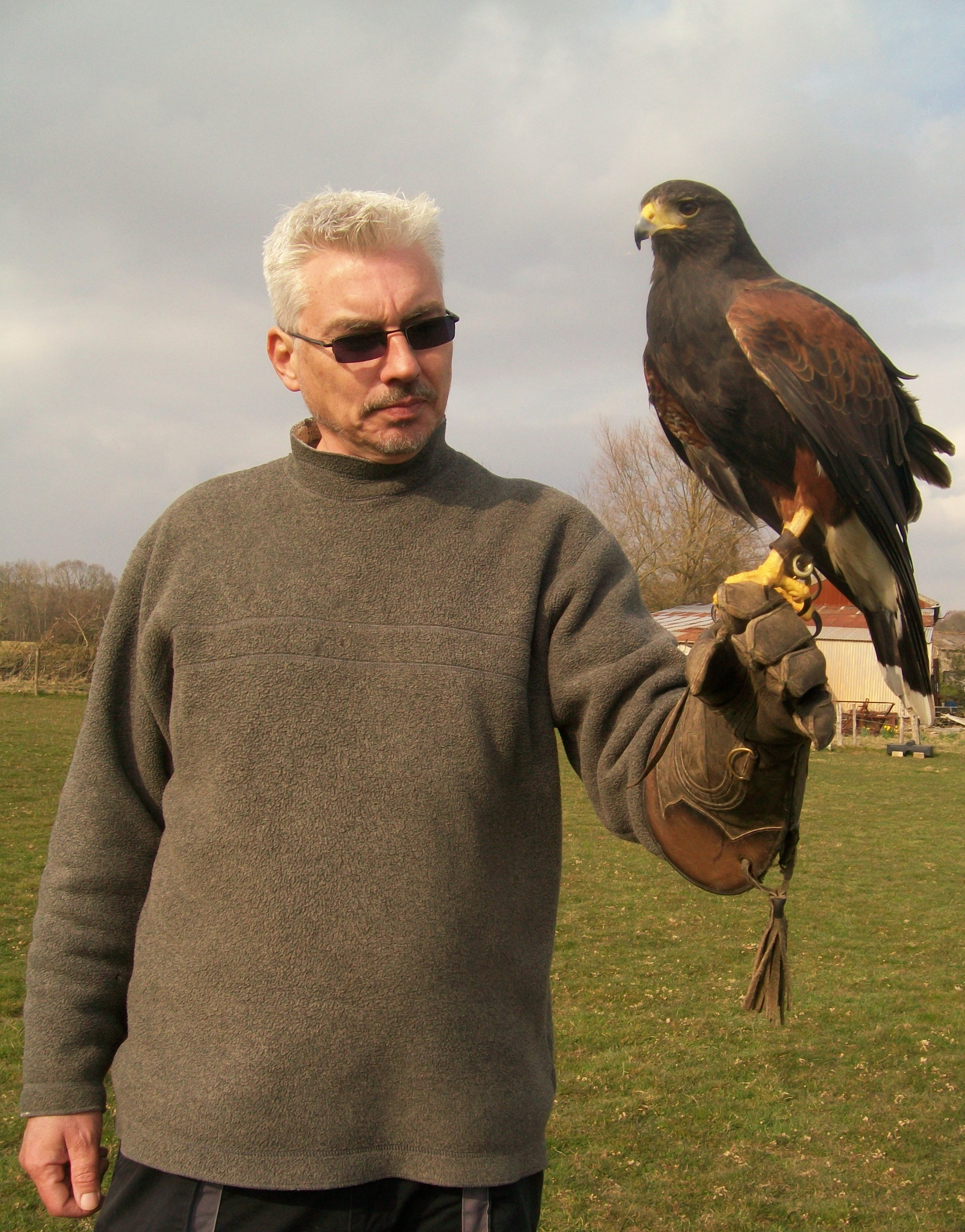 SussexFalconry 015 (2)