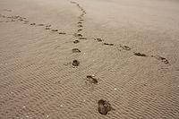 Designing your Pathways Programme
