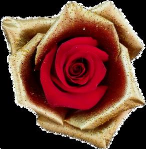 Jingle Bell Golden Rose