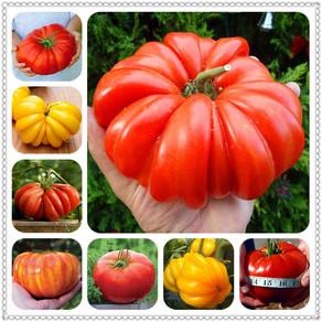 Organic Heirloom Tomato Seeds