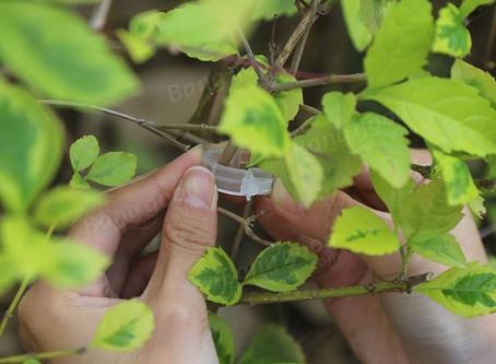 Honana HG-GT1 100Pcs Plant Clip Tomato Vines Bush Vegetable Clip Branch Durable Plastic Sling Clips