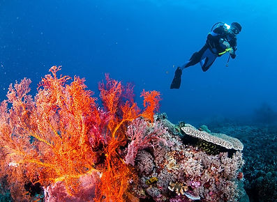Canggu-accommodation-Scuba-Diving-In-The