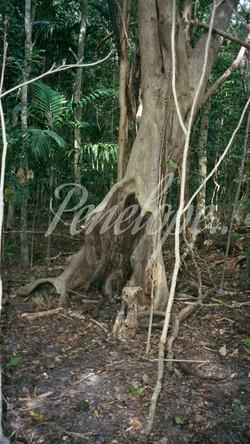 the trees slide show.jpg